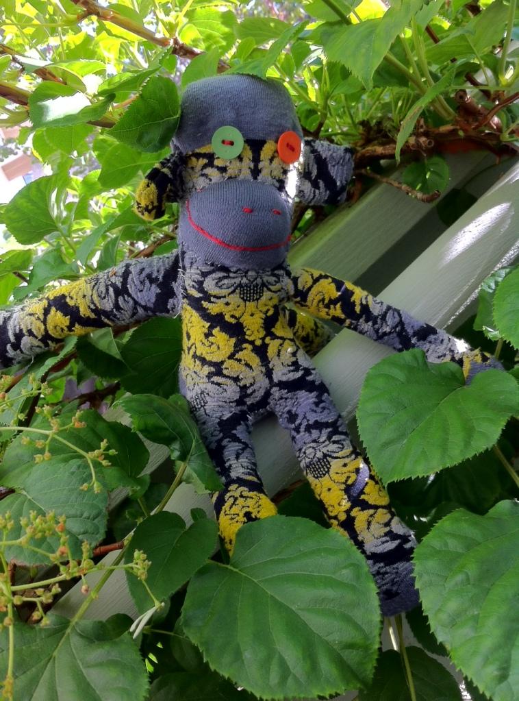 Oscar in the climbing hydrangea.